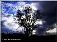 ALBERO MORTO   - Monterosso almo (5970 clic)
