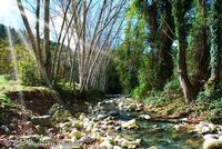 FIUME AMERILLO IN AUTUNNO   - Monterosso almo (6242 clic)