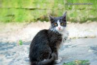 una gattina  - Monterosso almo (4545 clic)