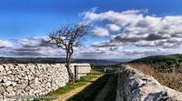 un bel sentiero   - Monterosso almo (4909 clic)