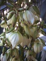 fiori del mio terrazzo  - Paternò (2884 clic)