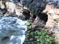 la scogliera sopra la quale si trova la rocca, particolare delle grotte  - Punta braccetto (6862 clic)