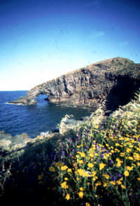 - Pantelleria (3545 clic)