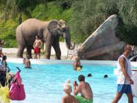 Al bagno sotto il controllo dell'elefante.  - Paternò (4031 clic)