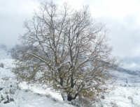 NEVE DEL FEBBRAIO 2009  - Caccamo (6897 clic)