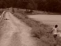 Biviere di Cesarò: la sopravvivenza   - Cesarò (5620 clic)