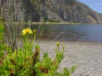 Flora estiva laghetti di Marinello  - Marinello (6800 clic)