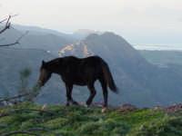 La libertà di dominare:cavallo selvatico al pascolo con sfondo Isole Eolie e Tindari  - Novara di sicilia (5475 clic)