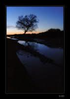 Albero al tramonto nelle campagne di Contrada Puntarazzi  - Ragusa (4461 clic)