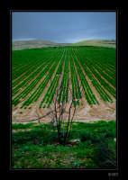 - Licodia eubea (5534 clic)