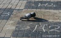 piccioncini amorosi  - Lentini (5626 clic)