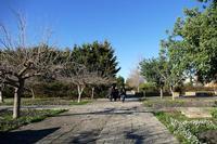 ORTO BOTANICO Passaggiata all' Orto botanico  - Gibellina (727 clic)