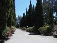 Viale d'ingresso del parco dell'arte Fondazione La Verde, La Malfa - Viale di accesso al Parco dell'Arte.    - San giovanni la punta (7188 clic)