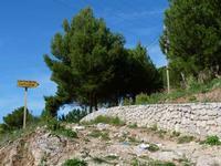 Il sentiero che porta al Castellaccio    - San martino delle scale (2256 clic)