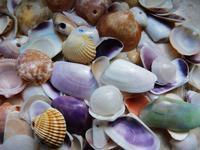 conchiglie della spiaggia di Isola delle Femmine (905 clic)