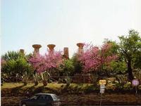 Valle dei Templi Uno scorcio della valle dei templi di Agrigento   - Agrigento (2512 clic)