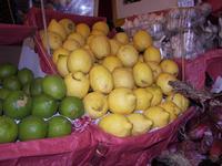 limoni verdi e gialli  PALERMO Maria Pia Lo Verso