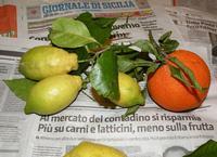 Agrumi di Sicilia con giornale  PALERMO Maria Pia Lo Verso