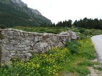 Antico muro di Poggio San Francesco   - Giacalone (1803 clic)