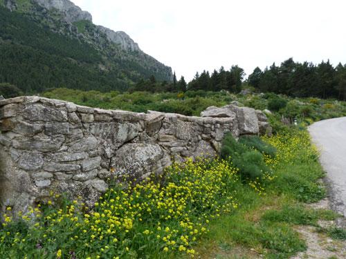 Antico muro di Poggio San Francesco - GIACALONE - inserita il 15-May-14