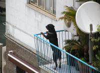Cane al balcone  PALERMO Maria Pia Lo Verso