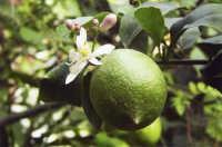 limone e zagara limone e zagara PALERMO Maria Pia Lo Verso