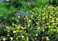 Campo in fiore   - Resuttano (3018 clic)