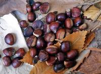 Castagne su foglie secche  PALERMO Maria Pia Lo Verso
