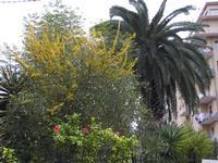 La palma  ---il giardino della galleria studio 71 quando ancora c'era la palma PALERMO Maria Pia Lo