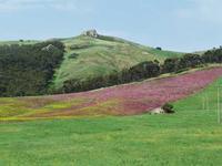 Campo di sulla e grano  Tra Resuttano e Ponte Cinque Archi   - Resuttano (4222 clic)