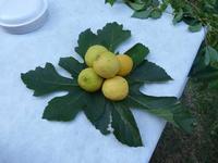 composizione di limoni  composizione di limoni su foglia di fico - agosto 2013  - Ficuzza (3103 clic)