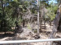 foto dal monte Pellegrino Alcuni aspetti dell'incuria in cui versa la riserva palermitana  - 21 lugl