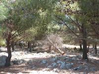 Foto dal Monte Pellegrino  Alcuni aspetti del degrado della riserva orientata. Via Monte Ercta  - 21