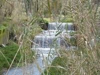 Torrente fra le canne Il torrente di Sant'Angelo di Brolo. la caratteristica di questo torrente sono una serie di cascatelle. Viene in mente F.Petrarca   'CHIARE, FRESCHE E DOLCI ACQUE'      - Sant'angelo di brolo (2477 clic)
