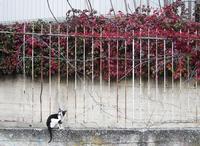 Il gatto e la vite La rossa vite americana in autunno PALERMO Maria Pia Lo Verso