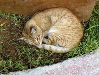 Gatto in giardino Uno dei tanti gatti della colonia di gatti della galleria Studio 71  PALERMO Maria