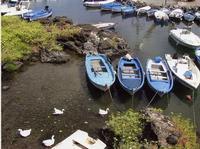 Il porticciolo di Ognina Barche e anatre al porticciolo di Ognina a Catania  - Catania (1447 clic)