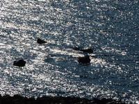 Mare d'argento   - Brolo (1636 clic)