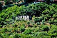 CASOLARE  FRA IL VERDE DEI NEBRODI   - Sant'angelo di brolo (943 clic)