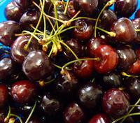 Le mie ciliege  Quest'anno le ciliege hanno raggiunto quota 7,00 € cioè circa lire 14.000. Una cifra