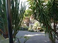 Hotel Garden La vegetazione lussureggiante del parco dell'hotel Garden   - Trappeto (2754 clic)