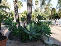 Hotel Garden La vegetazione lussureggiante del parco dell'Hotel Garden di Trappeto   - Trappeto (2519 clic)