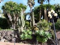 Hotel Garden La vegetazione lussureggiante del parco dell'Hotel Garden di Trappeto (frazione di S.Giovanni La Punta - Catania)  - Trappeto (3003 clic)