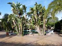 Hotel Garden La vegetazione lussureggiante del parco dell'Hotel Garden di Trappeto   - Trappeto (2404 clic)