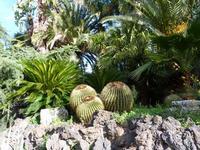 Hotel Garden La vegetazione lussureggiante del parco dell'Hotel Garden di Trappeto   - Trappeto (2760 clic)