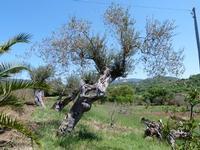 Sulla strada per Castelbuono (3973 clic)