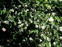 E' arrivata la primavera Nel giardino della galleria d'arte Studio 71 di Palermo PALERMO Maria Pia L
