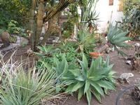 Parco della Fondazione La Verde La Malfa Vegetazione del parco dell'arte  - San giovanni la punta (1013 clic)