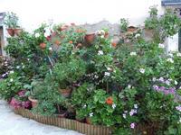 Aiuola con piante varie fiorite Lungo la salita per il castello di Brolo- giugno 2014  - Brolo (1361 clic)