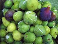 Fichi fichi al mercato di Acireale  - Acireale (3026 clic)